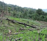 nicaragua-rainforest