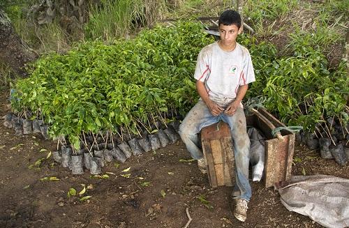 Coffee Grower In Ecuador