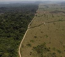 0-1-0-amazon-deforestation-1
