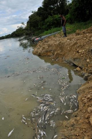 Second major spill that occurred in the Pasion river from REPSA's palm oil production activities, Peten, Guatemala, June 9, 2015. CDVN